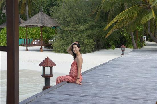 بانيان تري جزر المالديف صورة فوتوغرافية