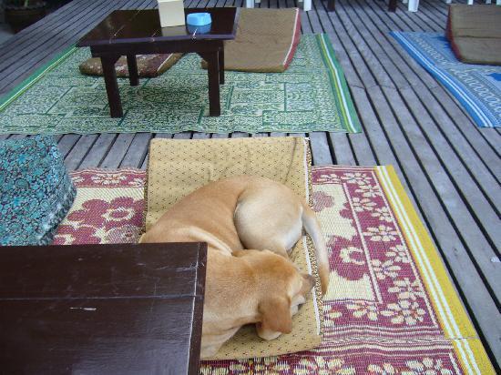 Wind Beach Resort: resort养的狗