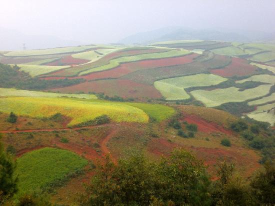 Dongchuan Red Land: CIMG5036