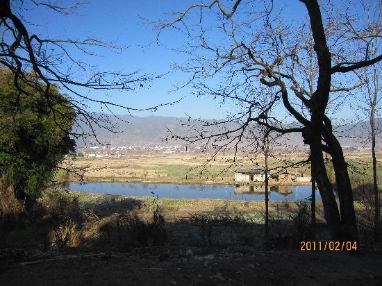 Dali University: 树与湖