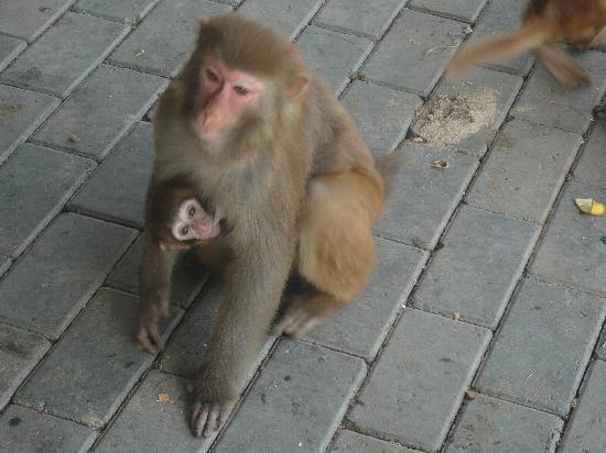 Tianjin Zoologlal Garders