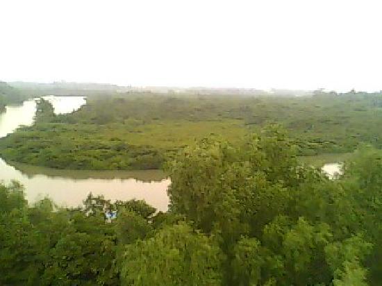Haikou Mangrove: 远眺红树林