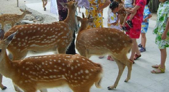 Deer Farm, Hainan