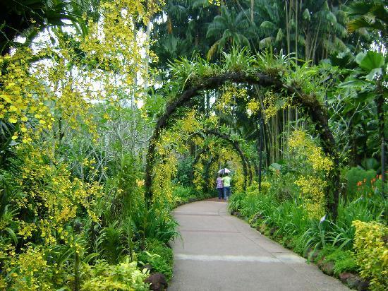 Orchideen weg im botanischen garten photo de jardin for Jardin botanique singapour
