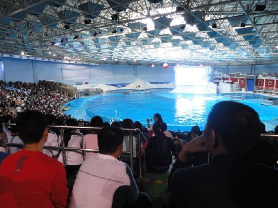 青岛海豚表演馆