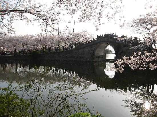 Wuxi, China: 长春桥边的樱花