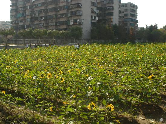Shantou Agricultural Science Park