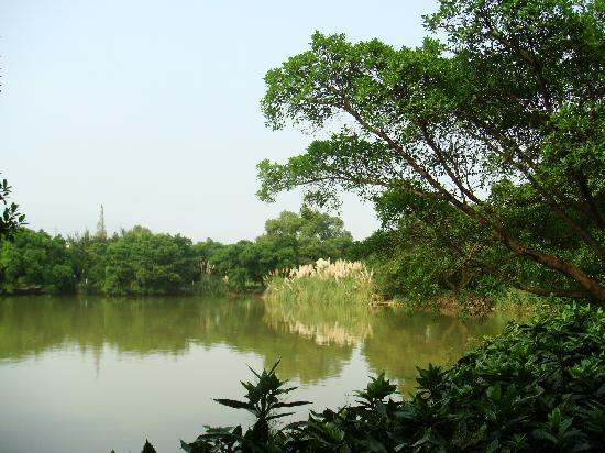Jiangxin Island: C:\fakepath\DSC05213