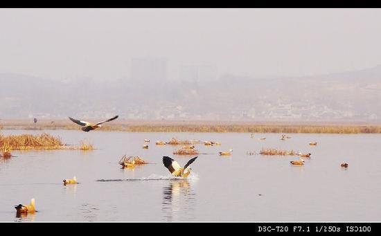 Bijie, الصين: 鸟