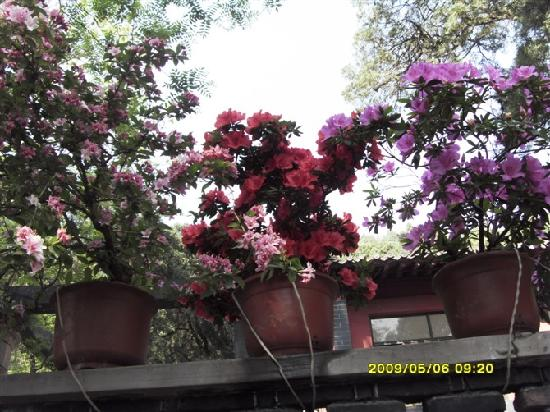 Bixia Pokwong Scenic Resort: 8