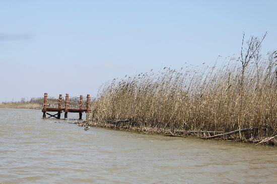 Chongming Dongtan Natural Reservation