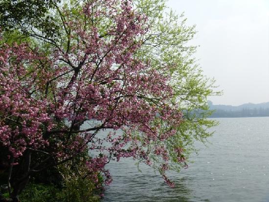 Hangzhou, Chine : 湖边花