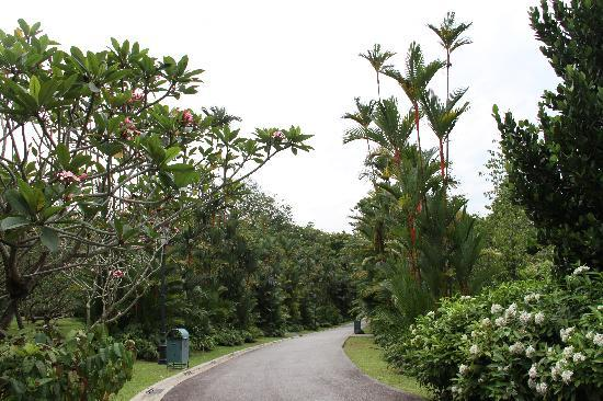 Singapore: 植物园