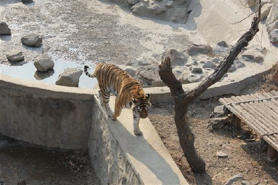 Shijiazhuang Zoo