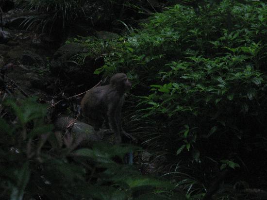 Taihang Mountain Macaca Reserve: IMG_3241