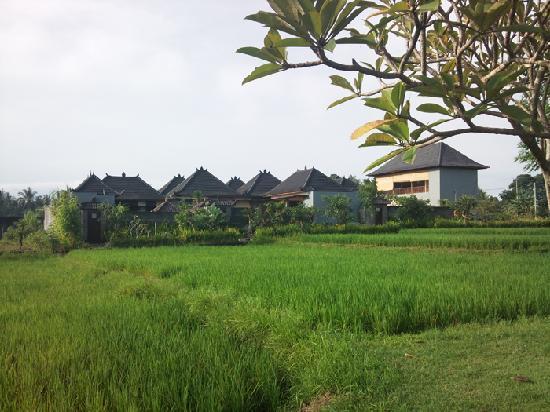 Villa Nian: Villa全景-稻田边