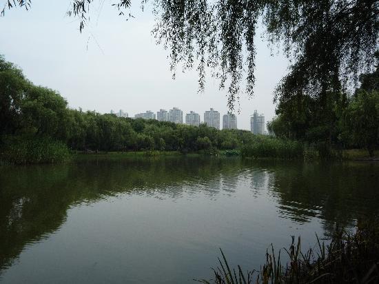 Qingdao Yizhong Grass Skating