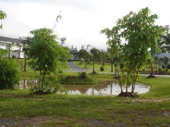 Sipsongpanna Botanical Garden, Chinese Academy of Sciences : p_large_hxzA_18537p017013