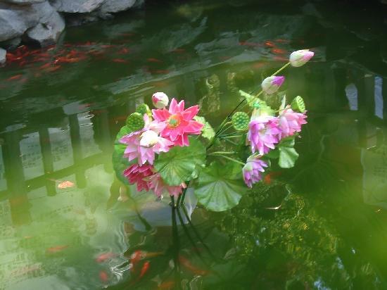 新图像2222222 - Picture of Pool and Mulberry Tree Temple (Tanzhe ...