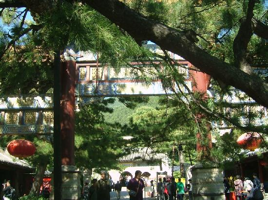 Pool and Mulberry Tree Temple (Tanzhe Si) : 新图像222222222222