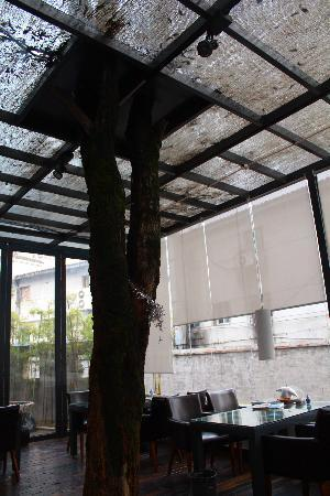Jingdezhen International Youth Hostel : 有大树穿过咖啡厅