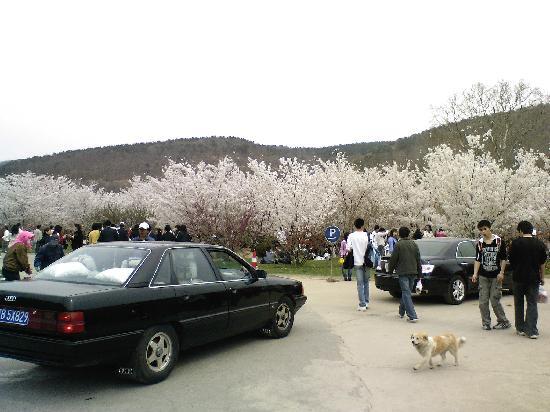 Lushun Longwangtang Cherry Park: 刚进园子