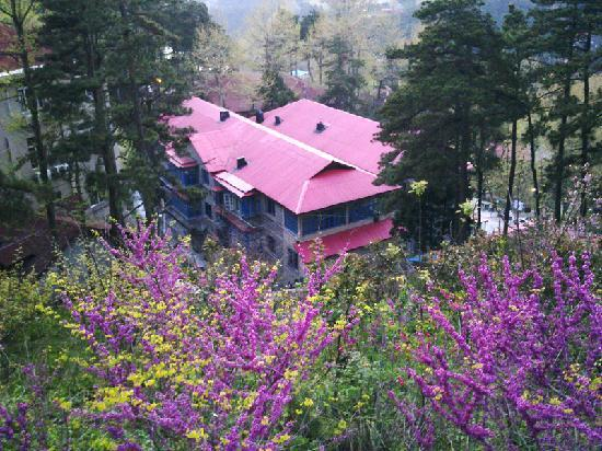 Lushan Nature International Youth Hostel : 四月末的大自然青旅,很漂亮