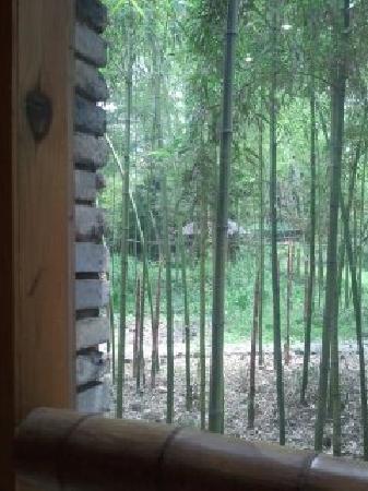Yao's Cour Yard: 饭厅外的竹林