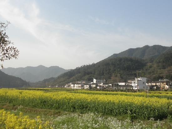 Wuyuan Rape Flower Scenic Spot