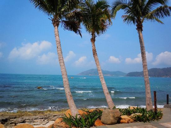 แมนดาริน โอเรียนเต็ล ซานย่า: 11年4月三亚行 599海边椰树