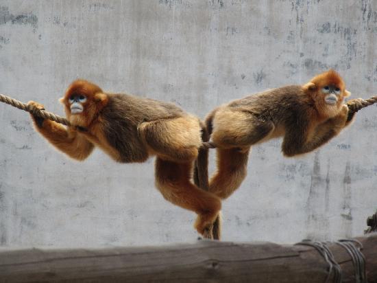 Rongcheng Shendiaoshan Wildlife Park