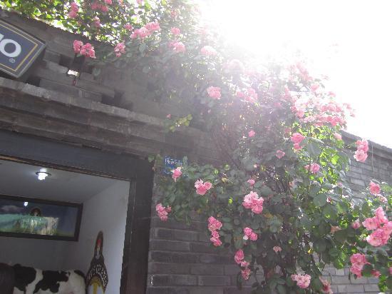 Kuanzhai Ancient Street of Qing Dynasty: 去的那天阳光正好