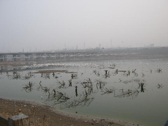 Sanmenxia Swan Viewing Area