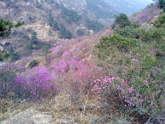 Jiaonan, Κίνα: DSC01511