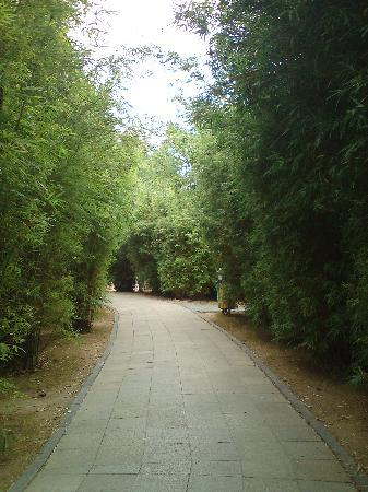 Shenzhen Mangrove Nature Reserve: 小竹径给人诗情画意的感觉,小径很长,弯弯曲曲,似乎没有尽头,走在上面好像什么烦恼都没有了