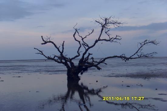 Hainan, China: 海退潮