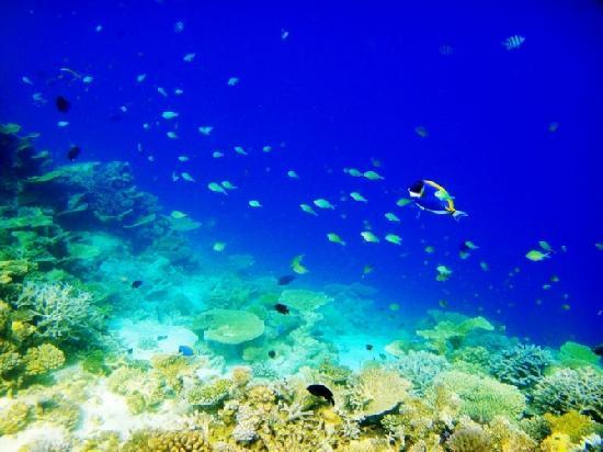 Atollo di Male Nord: 马尔代夫--海底世界