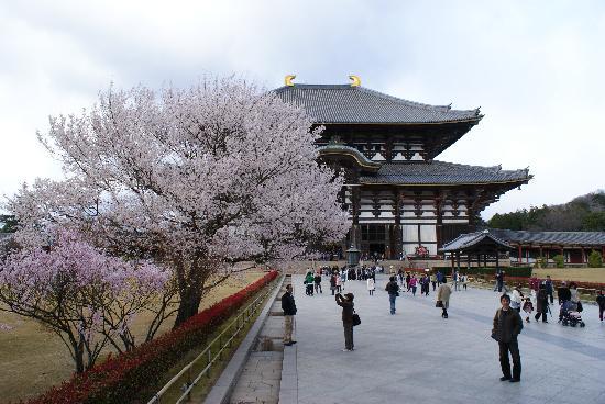 จังหวัดนาระ, ญี่ปุ่น: 东大寺樱花