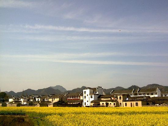 Qianxian Nanping Village Scenic Resort: 齐云山下的油菜花
