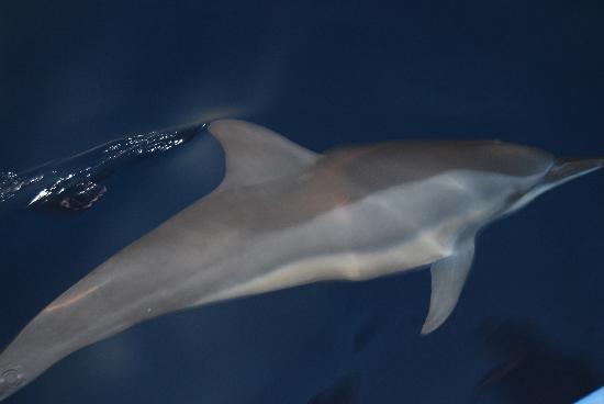 Atolón norte de Malé: 海豚
