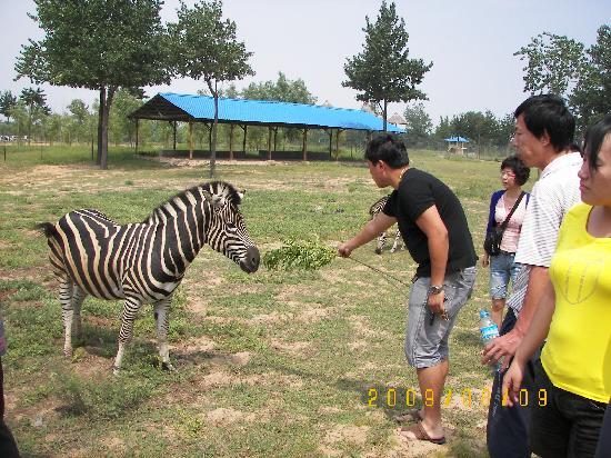 Qinghuang Island Wildlife park: 100_1481