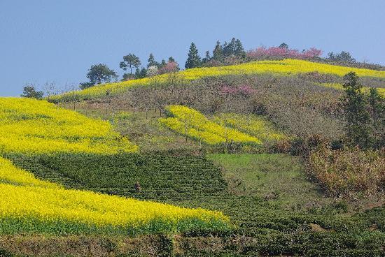 Shitan Village: 附近其他的山坡也都值得转转。还有桃花看。