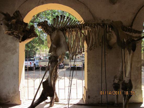 N'Djamena, Chad: 走廊里放着的化石