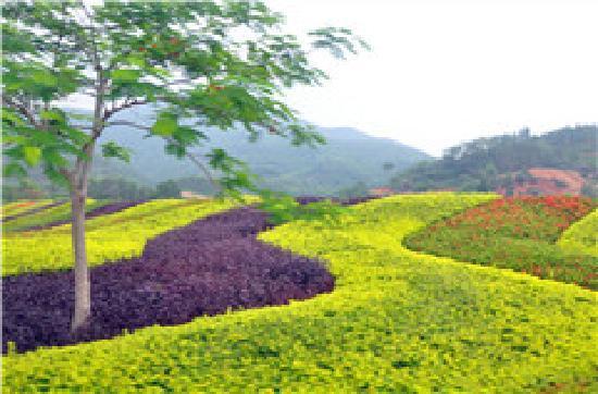 Sanya, China: 景色不错