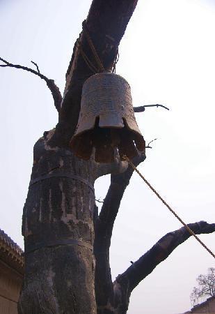 Ranzhuang Tunnel Warfare Site: 村口标志性老槐树和敌袭示警的铜钟