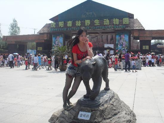 Shenyang Qipan Mountain : 这张是在动物园门口照的
