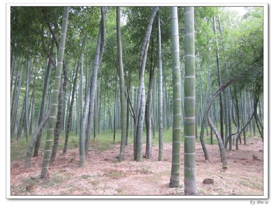 Tianxia Yinkeng Scenic Resort