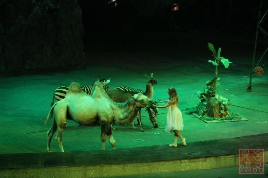 Chimelong International Circus : 大马戏