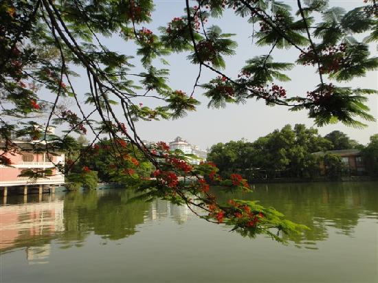 Yongji Ecological Park: 还没有完全绽放的凤凰花,但是也很漂亮。