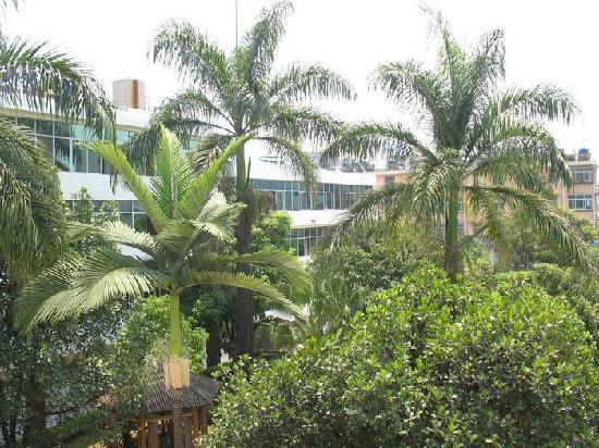 Oriental Hot Spring Hotel : 站在酒店的廊间看窗外,满眼都是绿色